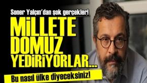 'Dinci AKP Millete Domuz Yediriyor...'