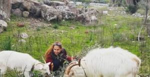 Şöhreti Bıraktı, Köyde Keçi Sağıyor...