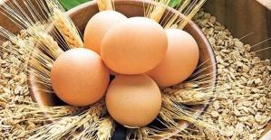Yumurta Alırken Dikkat! Kabuğunda...