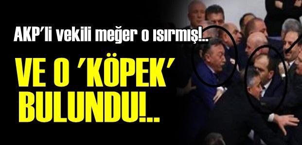 SONUNDA O 'KÖPEK' BULUNDU!..