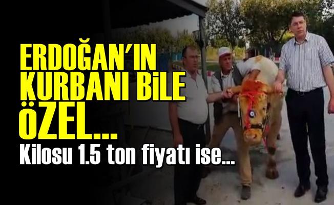 Erdoğan'a Özel Kurban!