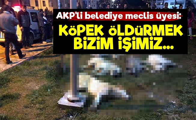 AKP'li Üye: Köpek Öldürmek Bizim İşimiz