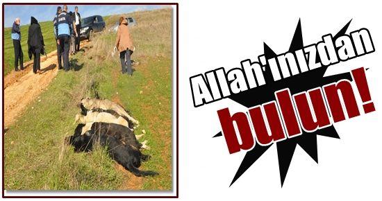 ALLAH'INIZDAN BULUN!