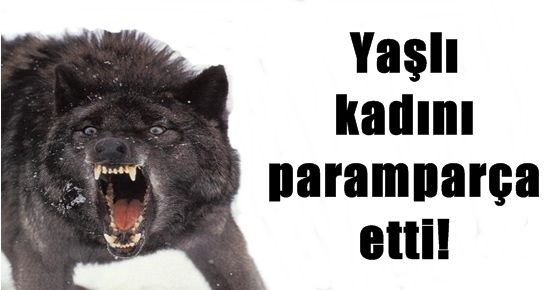 KONYA'DA KURT VAHŞETİ...