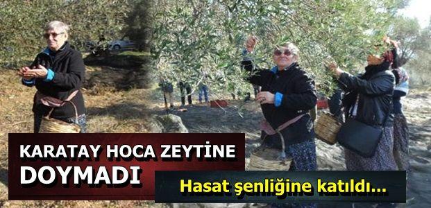 ŞALVAR GİYDİ, ZEYTİN TOPLADI...