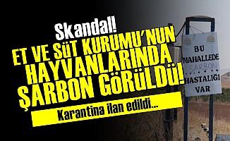 Ankara'da 'Şarbon' Paniği!