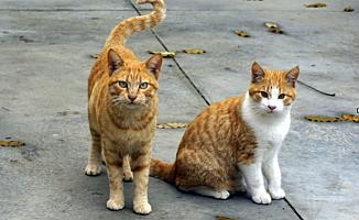 Kedilerin İsimlerini Öğrenebildiği Kanıtlandı!