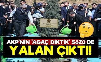 AKP'nin 'Milyarlarca Ağaç Diktik' Sözü de Yalan Çıktı!