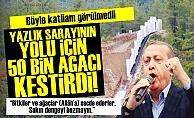 50 BİN AĞACI SARAYI İÇİN YOK ETTİ!