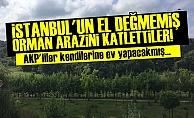 EV YAPACAĞIZ DİYE ORMANI KATLETTİLER!