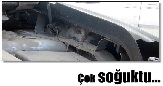 YAVRU KEDİ BUGÜNÜ ATLATTI AMA...