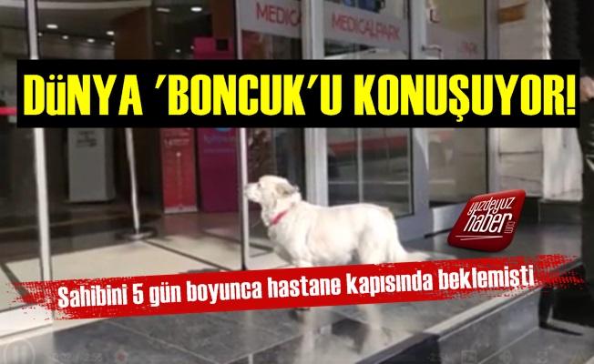 Dünya 'Boncuk' Köpeği Konuşuyor!