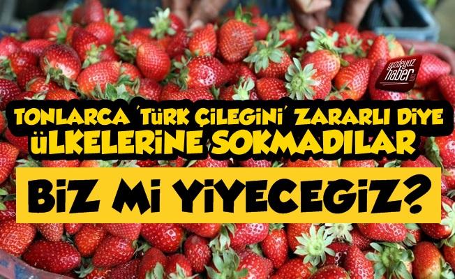 Tonlarca 'Türk Çileği' Zararlı Diye Geri Dönüyor
