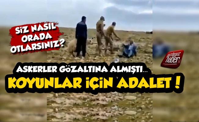 'TİGEM Arazisinde Otladınız' Diye Gözaltına Alınan Koyunlara 'Adalet' Talebi