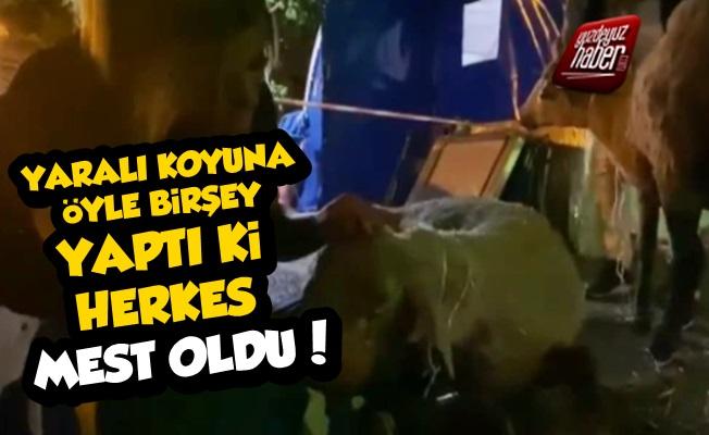 Yaralı Koyuna Türkü Söyleyen HAYTAP'çı Mest Etti