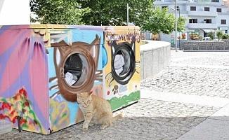 Çamaşır Makineleri Kedilere Yuva Oldu!