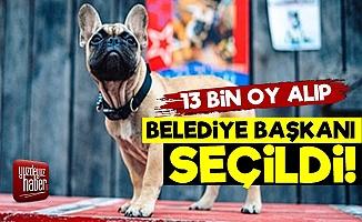 Bulldog Belediye Başkanı Seçildi!