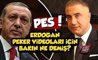 Erdoğan Sedat Peker Videoları İçin Bakın Ne Demiş?