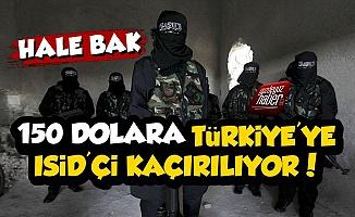 150 Dolara Türkiye'ye IŞİD'çi Kaçırılıyor!