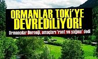 'AKP Ormanları TOKİ'ye Devrediyor'