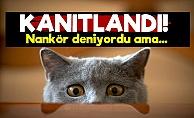 Bilim Dünyası Kedilerle İlgili O Gerçeği Açıkladı!