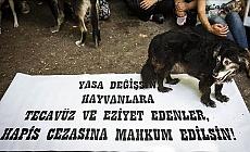 Hayvan Hakları Yasası Nihayet Çıkıyor!